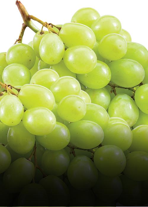 green_grapes_17FB631C